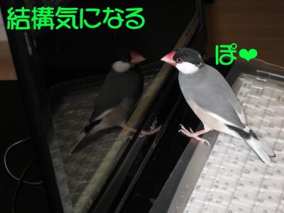 b0158061_20251380.jpg