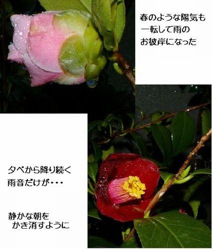 f0007689_8424273.jpg