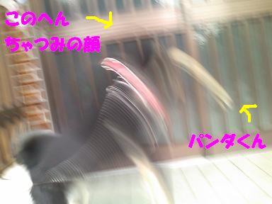 f0193892_15389.jpg