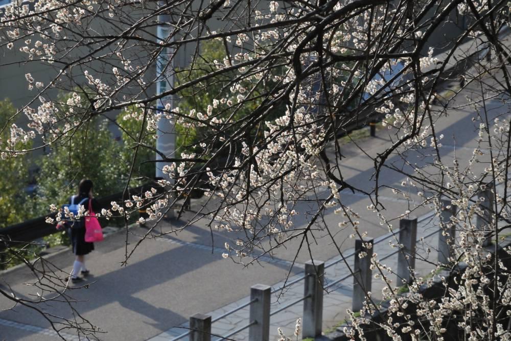 梅の咲く道_b0074098_8282155.jpg