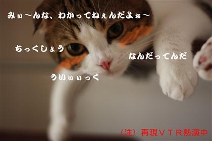 e0149299_1015581.jpg