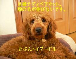 b0151505_1555744.jpg