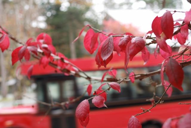 赤い葉と赤いバス_f0091207_14483265.jpg