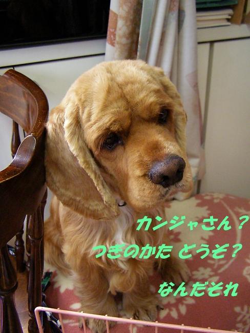 b0067012_0131489.jpg