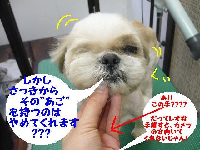こんなかんじ??&犬濯屋レシピ!!_b0130018_10403295.jpg