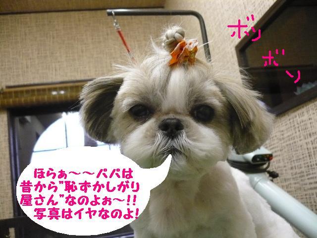 こんなかんじ??&犬濯屋レシピ!!_b0130018_10404497.jpg