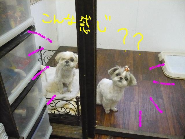 こんなかんじ??&犬濯屋レシピ!!_b0130018_10444975.jpg