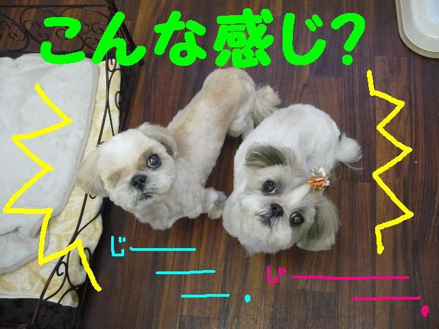 こんなかんじ??&犬濯屋レシピ!!_b0130018_1044573.jpg