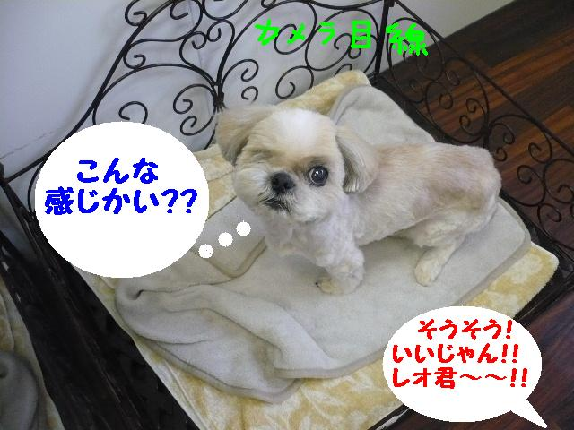 こんなかんじ??&犬濯屋レシピ!!_b0130018_1044664.jpg