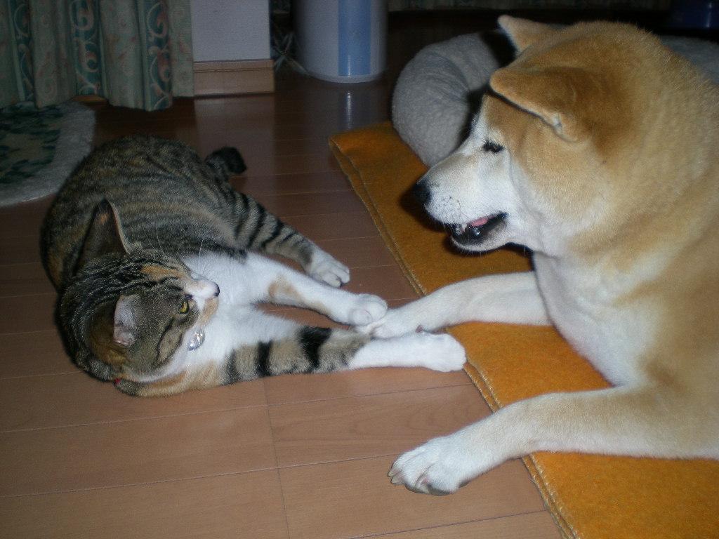 2009年3月21日(土)贅沢づくしのこころちゃん!_f0060461_2023650.jpg