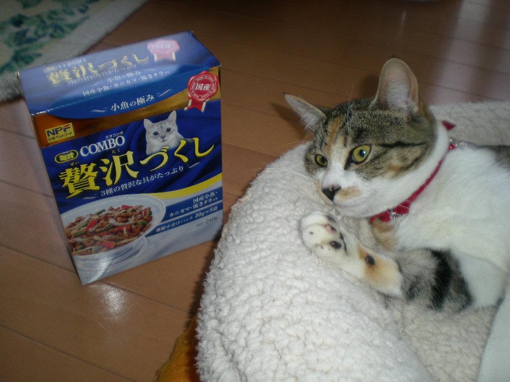 2009年3月21日(土)贅沢づくしのこころちゃん!_f0060461_20412114.jpg