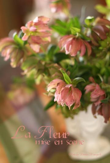 ピンクのクリスマスローズⅡ_f0127281_184116.jpg