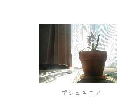 b0120001_21355854.jpg
