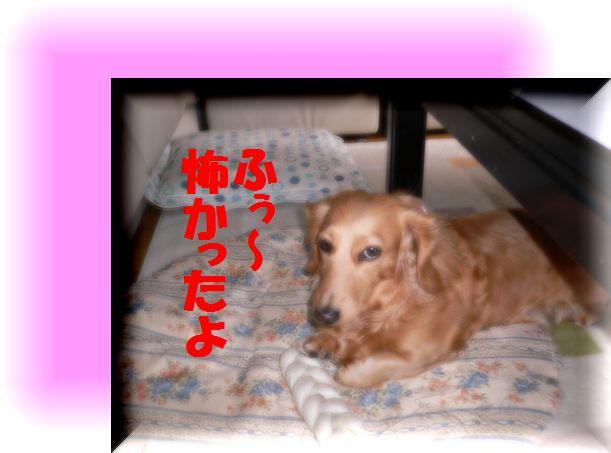 f0178701_13313589.jpg