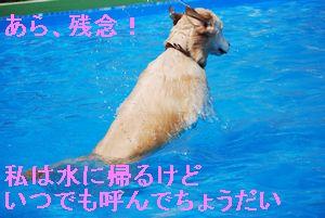 f0109202_1495267.jpg