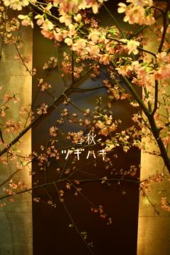 桜プロモーション_c0188809_1520239.jpg