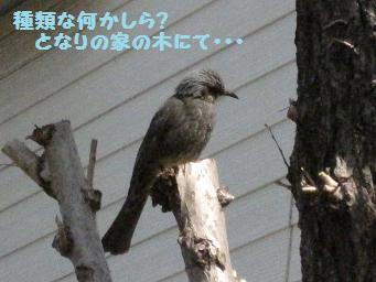 3月21日 エゴグラム_e0136815_91858100.jpg