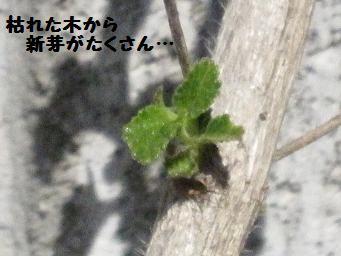 3月21日 エゴグラム_e0136815_9245130.jpg