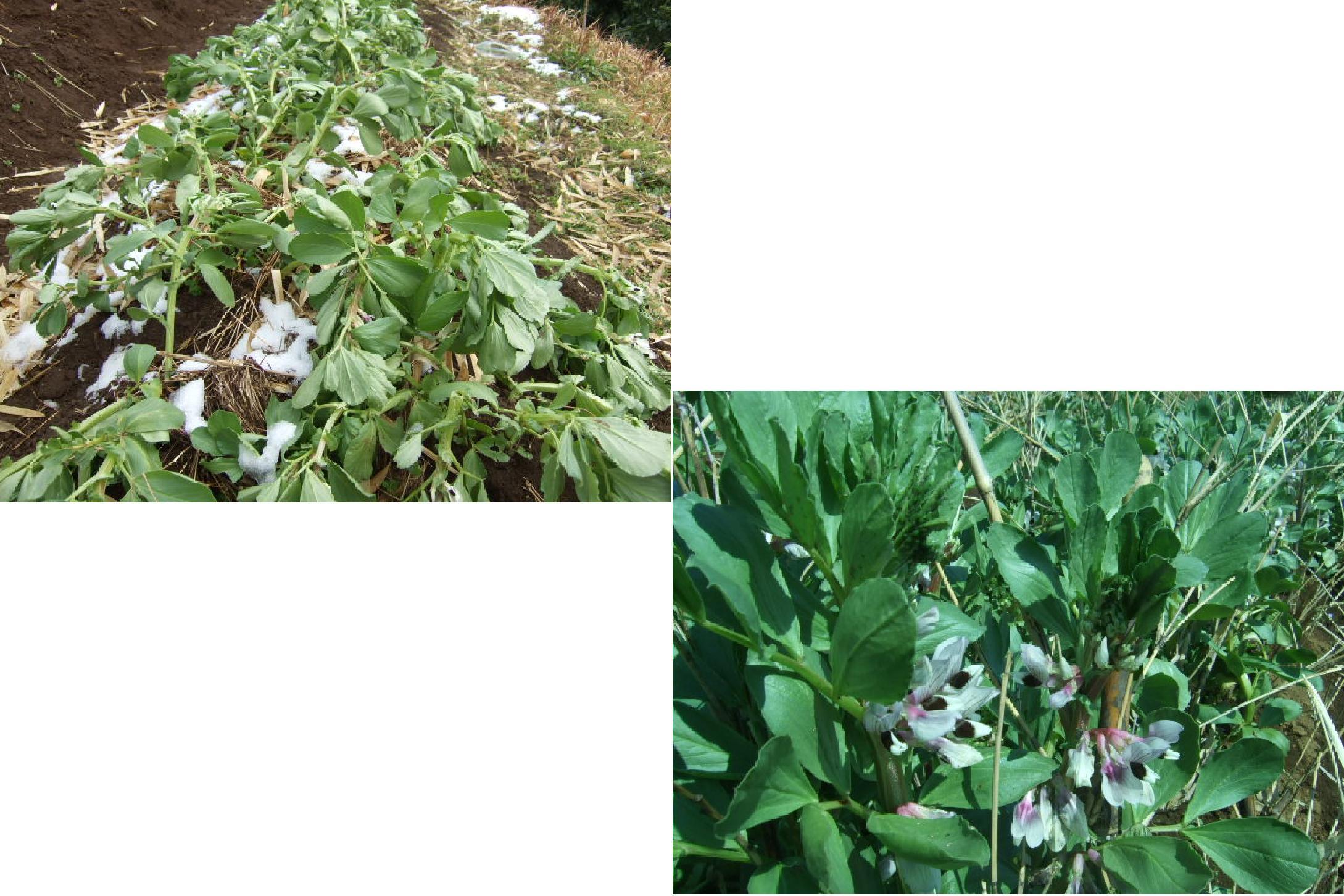 春です~野菜が...._b0137932_12171513.jpg
