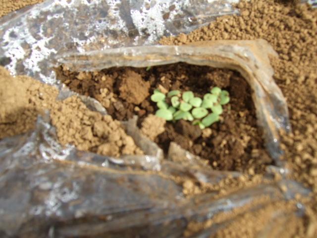 春です~野菜が...._b0137932_12174971.jpg