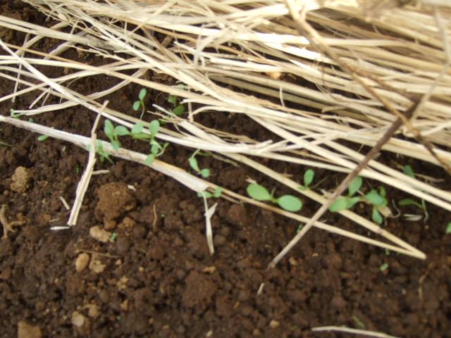 春です~野菜が...._b0137932_1218983.jpg