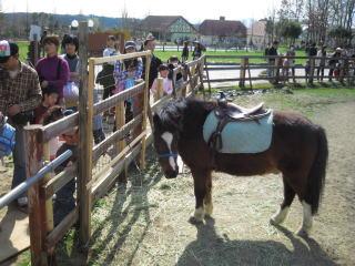滋賀農業公園ブルーメの丘_c0113733_3957100.jpg