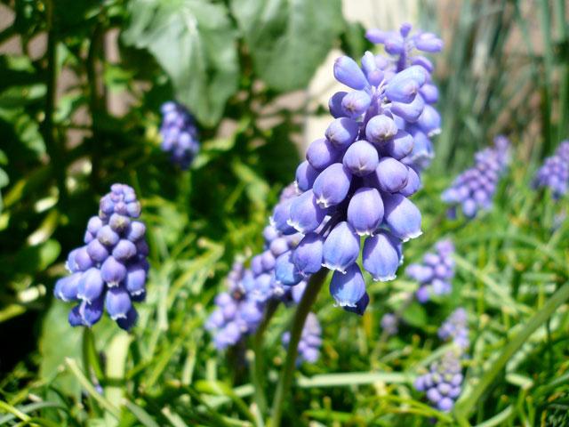 春の庭_b0168736_16122061.jpg