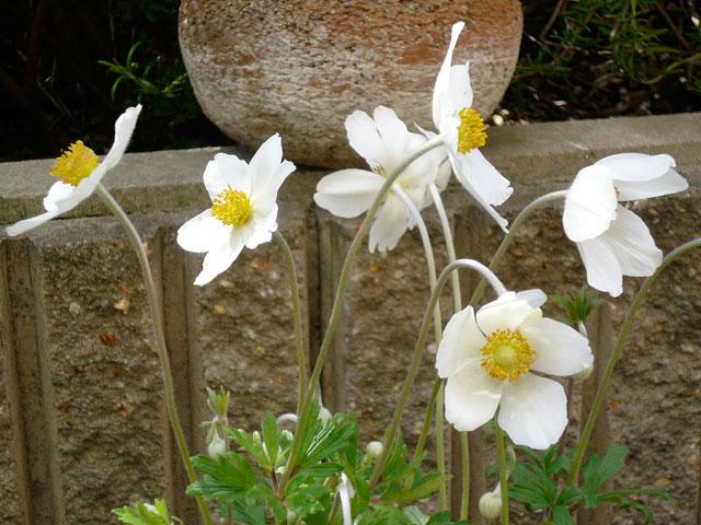 春の庭_b0168736_16465591.jpg