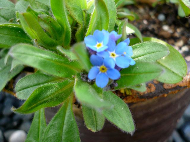 春の庭_b0168736_16483293.jpg