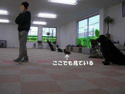 f0186040_20383850.jpg