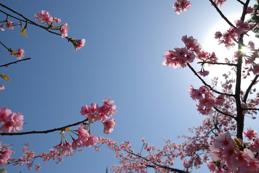 桜だけで_c0171945_21191855.jpg
