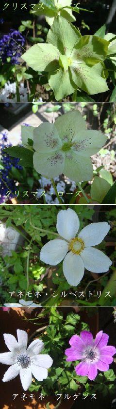 e0117945_1612010.jpg