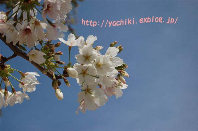 b0153451_22181842.jpg