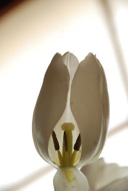 Tulip Fair _d0135762_2384429.jpg