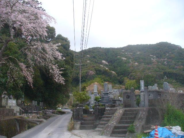 桜の春。九州はいよいよ桜の本番へ。_c0061686_7183321.jpg