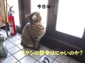 c0139488_1715386.jpg