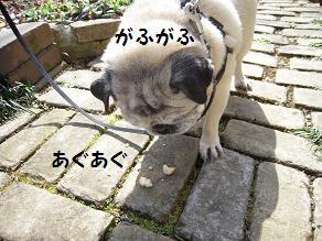 c0139488_1718273.jpg