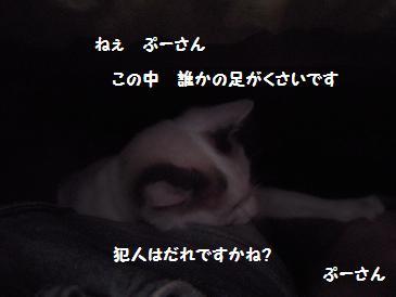 c0139488_17311251.jpg
