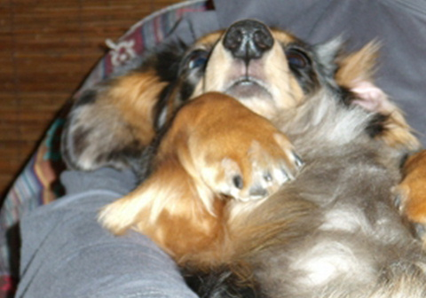 別 犬_f0195891_20471774.jpg