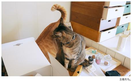 猫さんたちや,お世話になりますよ~ヽ(*´▽`)ノ。