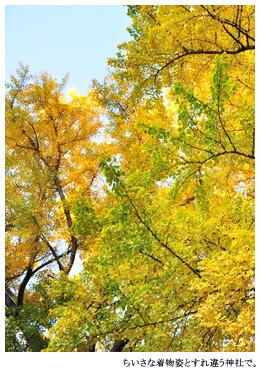 神社の木はのびのびと育っていて,その高さに神を投影してしまう。