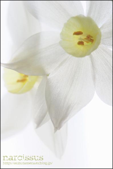 白い花_f0100215_23235749.jpg