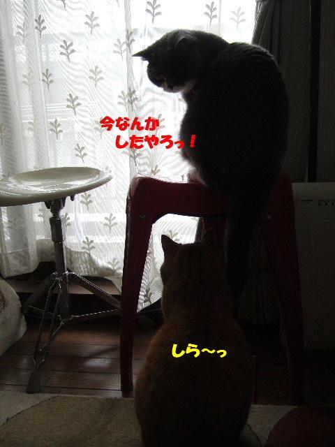 f0032020_2332835.jpg