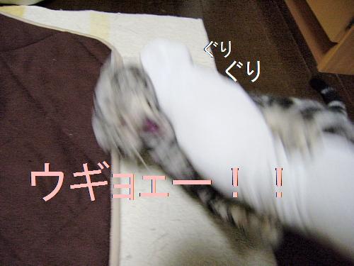 f0175434_23181924.jpg