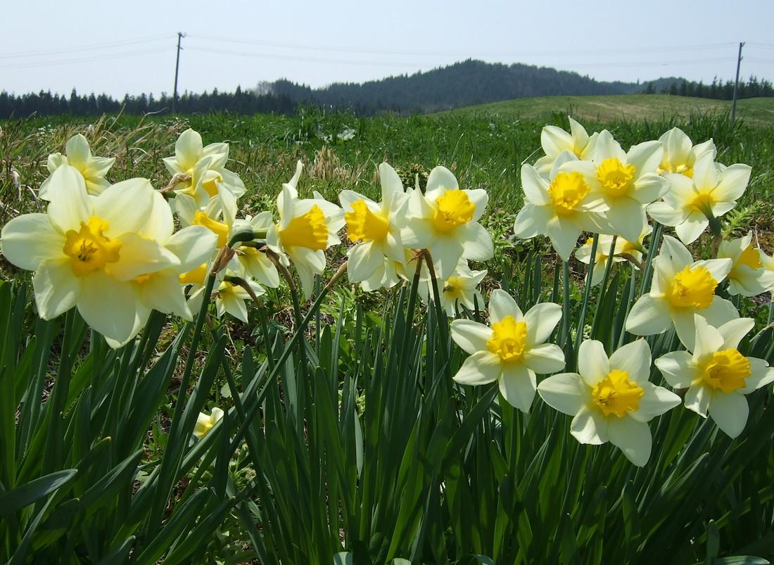 春めく県道_d0001843_23321171.jpg