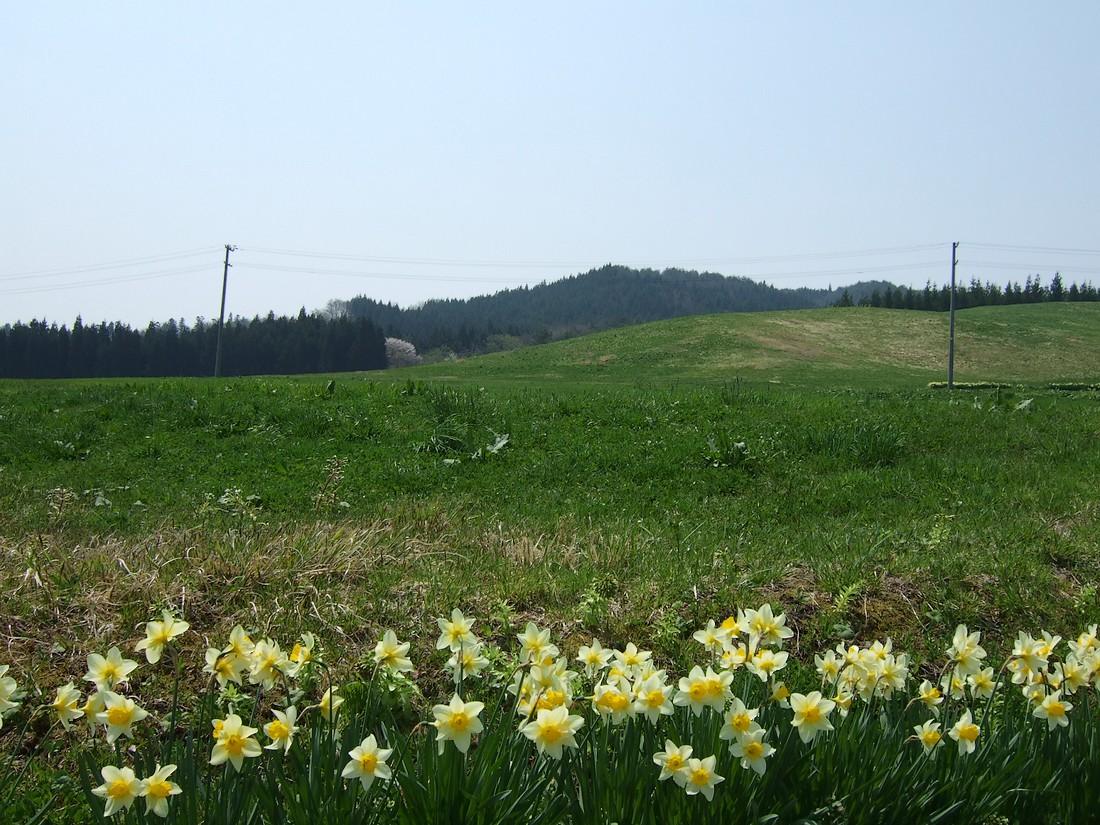春めく県道_d0001843_23322467.jpg