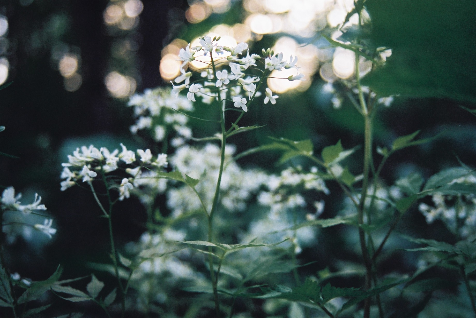 春まだ遠く…花13_a0103650_13483565.jpg