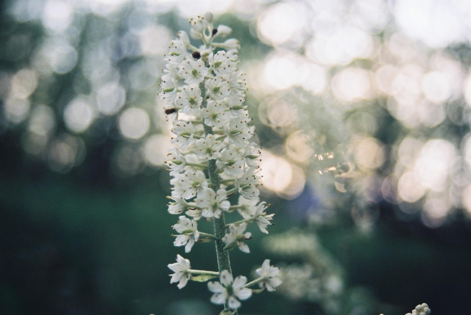春まだ遠く…花13_a0103650_13484445.jpg