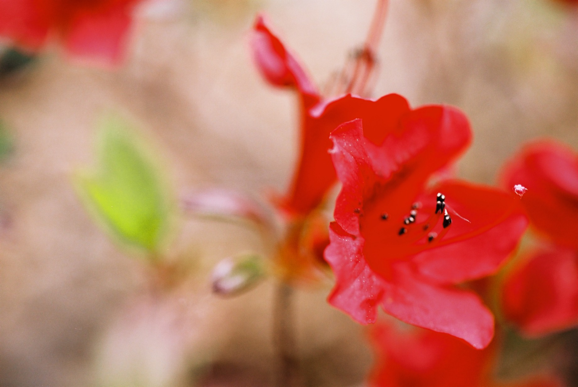 春まだ遠く…花13_a0103650_13504484.jpg