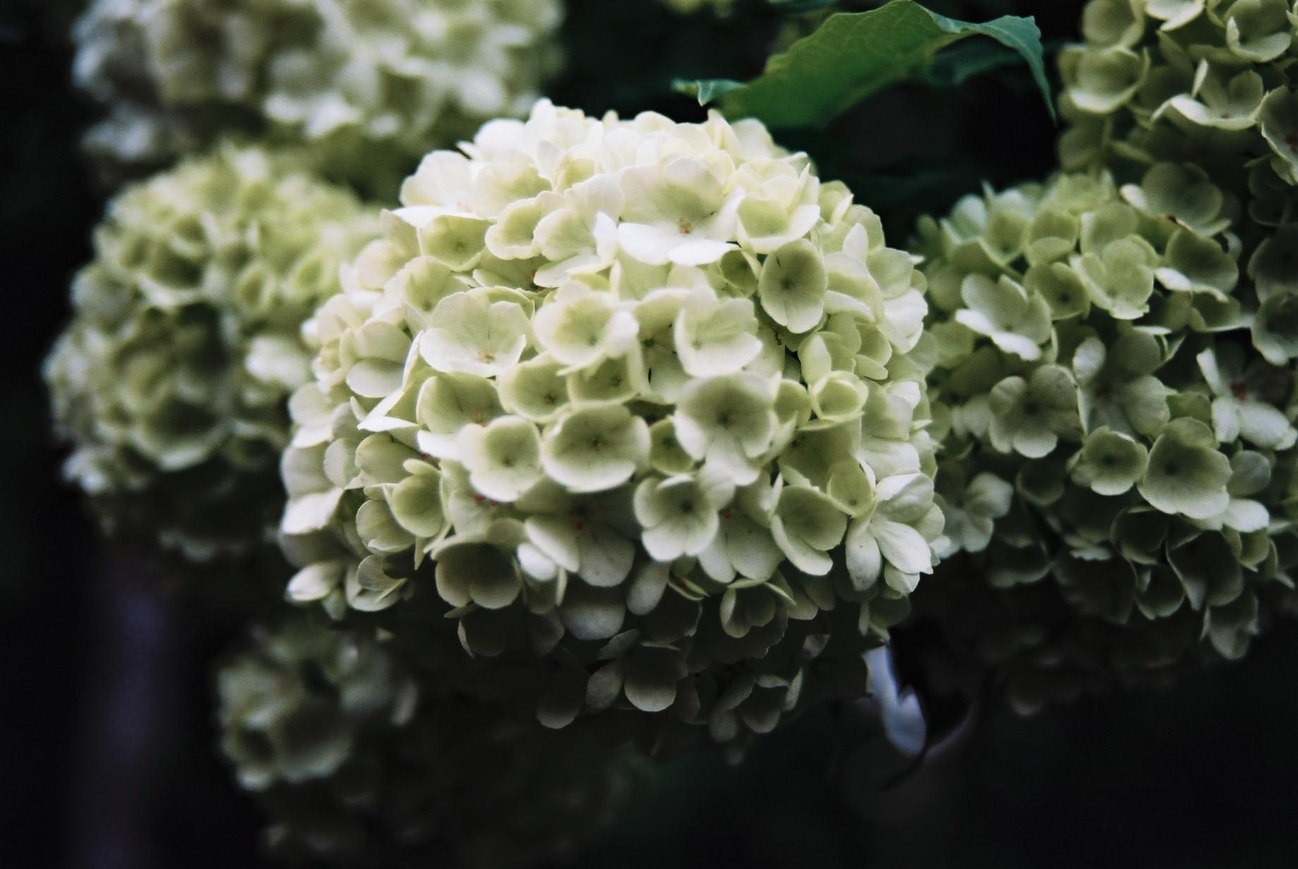 春まだ遠く…花13_a0103650_1350521.jpg